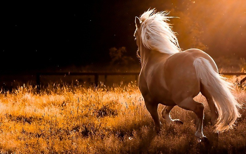 wallpaper cheval photo