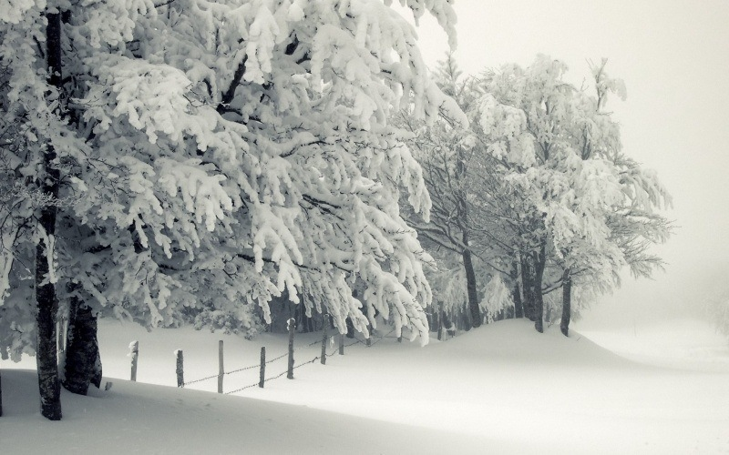 wallpaper Neige paysage hiver