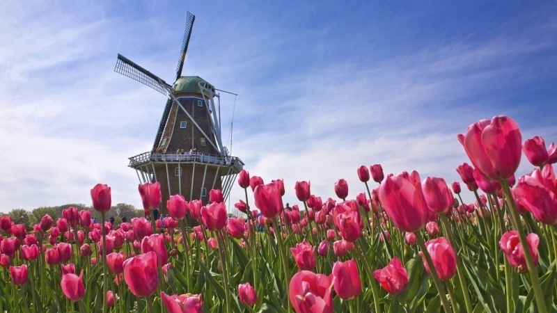 wallpaper hollande moulin tulipes